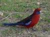 07-wp-parrot
