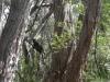 19-wp-black-parrot