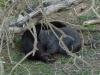 03-wilsons-promontory-wombat-family