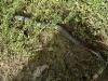 07-wilsons-promontory-brown-snake